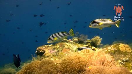 plongée sous marine bali amed