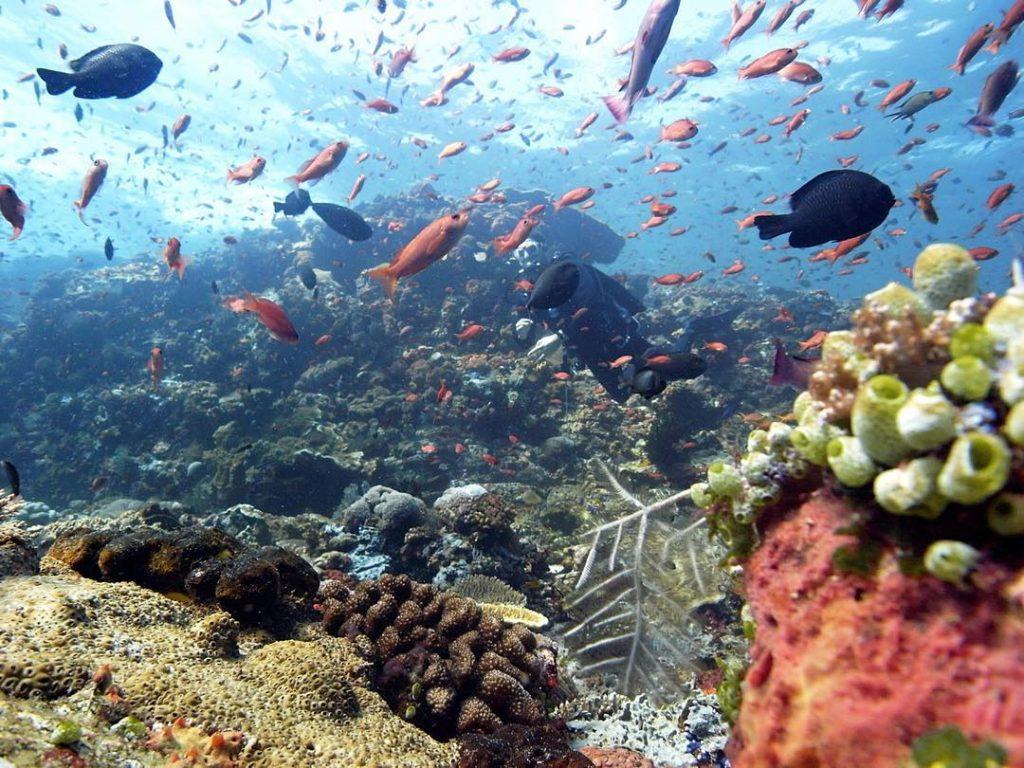 Bali, Un Veritable Paradis Pour Les Plongeurs Sous-Marins