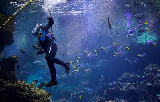 Plongée Bali : un endroit facile pour découvrir la plongée