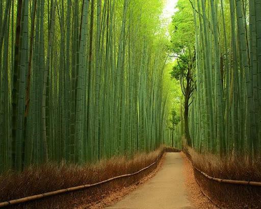 Tourisme Vert, La Nouvelle Idée de Tourisme