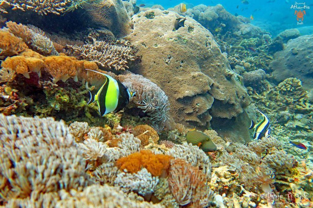 La plongée Bali: une pure merveille