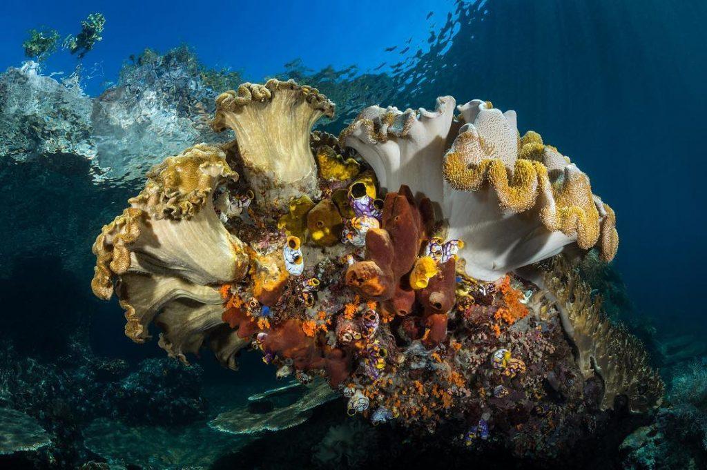 Le meilleur site de plongée à Tulamben : l'épave bali tulamben