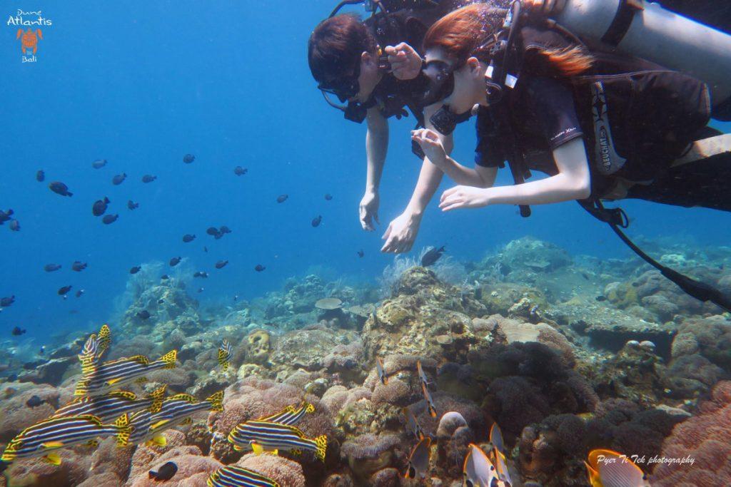 La plongée Nusa Penida se fait sur mesure