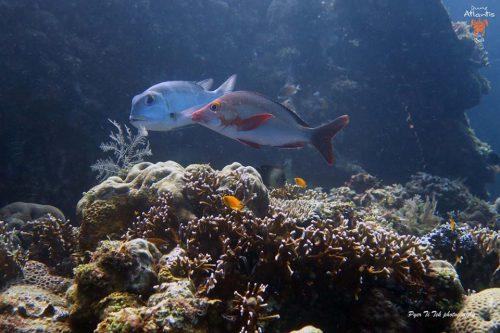 Soupe aux fruits de mer, Australie