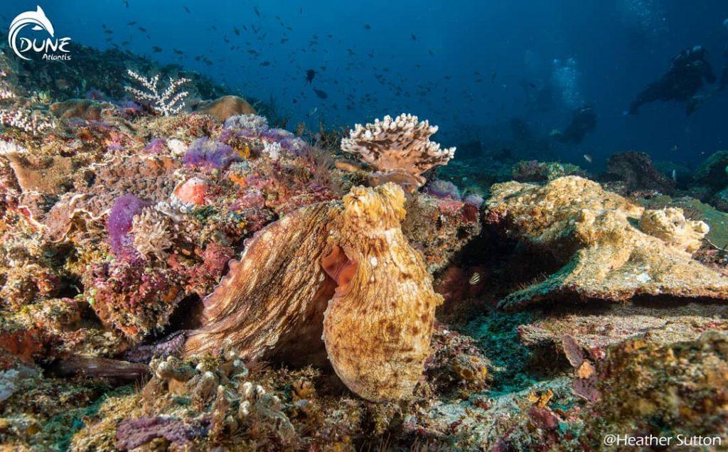 La plongée Sous Marine Bali: une expérience riche vous attend