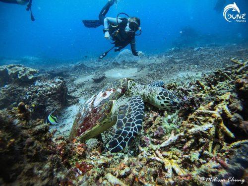 Plongée Tulamben : Courants et vie Marine