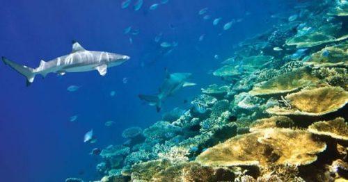 Les spots de plongée en apnée à Bali, ils sont tous beaux