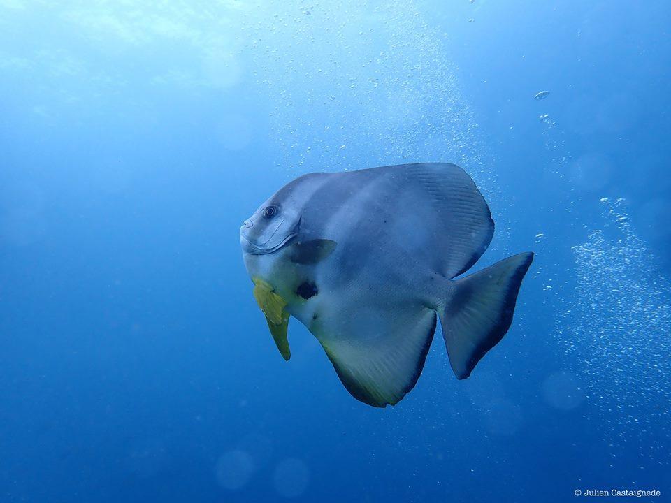 Tulamben plongée : une découverte sensationnelle