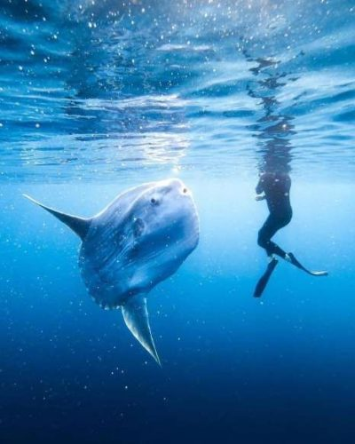 Mola Mola Bali : incroyable et mystérieux
